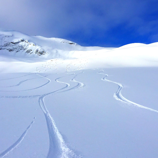 Several tracks through powder snow and blue sky in the background.