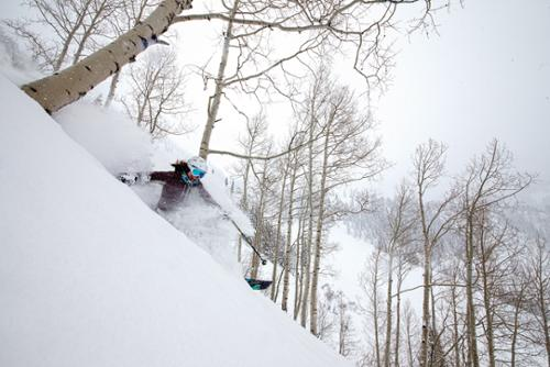 A skier gets a face shot of powder while skiing in the trees at Snowbird, Utah